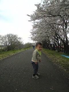 桜の並木でウンチきばり中